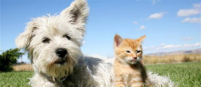 bandeau_chien_chat