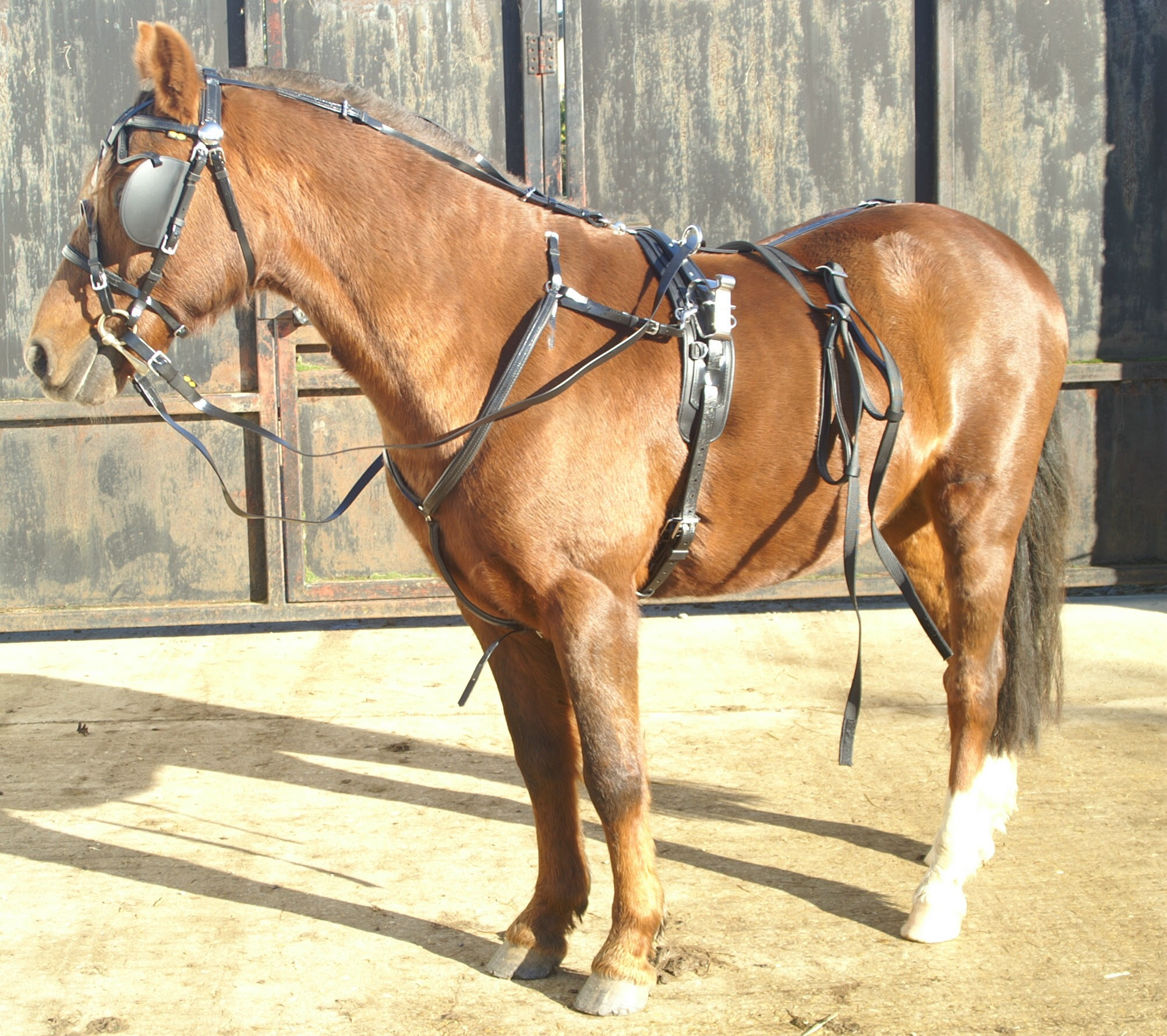 Harnais complet Trot Quick Hitch Poney Zilco