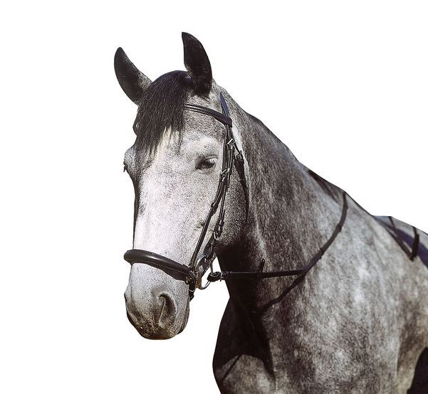 Bridon APOLLO shetland et poney