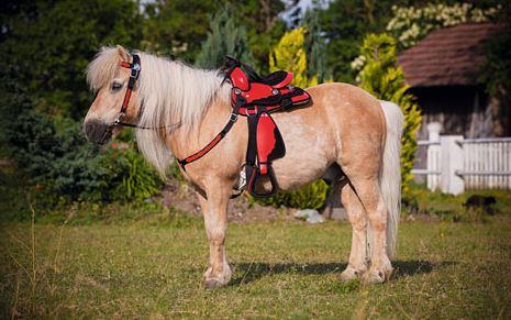 Ensemble Western pour poney
