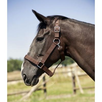 Licol NORTON cheval de trait