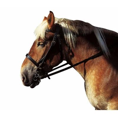 Bridon CORTINA huilé cheval de trait