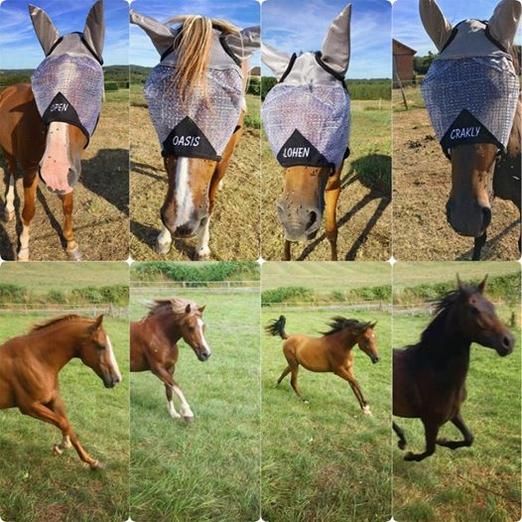 chevaux d'anais avec leurs masques anti-mouches personnalisés