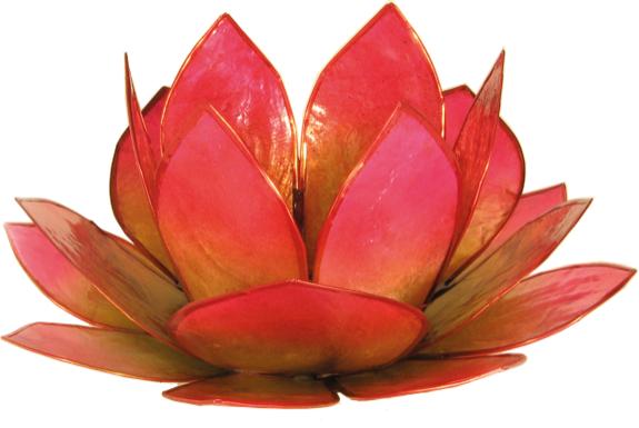Lotus Levée du Soleil - Vert et Rose