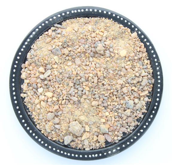 Encens Résine en Grains Benjoin du Siam 50 g
