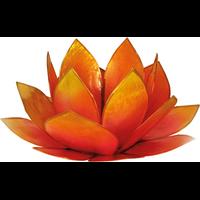 Lotus Levée du Soleil - Rose et Jaune