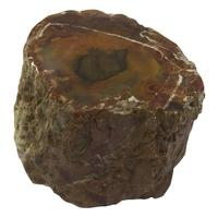 Bois Silicifié une Face Polie - Entre 400 - 500 gr