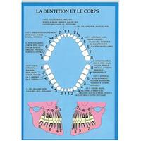 Dentition et le Corps