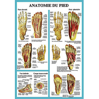 Anatomie du Pied - Planche A2