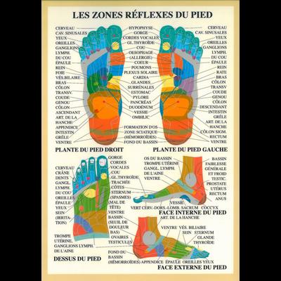 Zones Réflexes du Pied