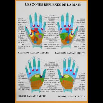 Zones Réflexes des Mains