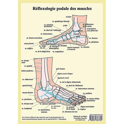 Réflexologie Podale des Muscles - Planche A4