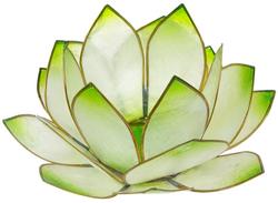 33438-lotus