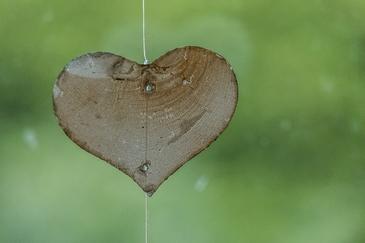 heart-1665157_640