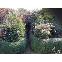 Plantarium 151029c