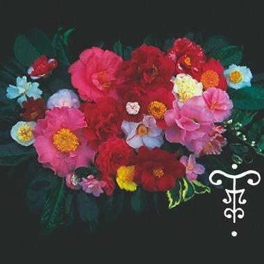 camellia_bouquet
