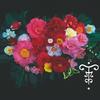Camellia japonica 'Paul Maymou'