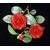 Camellia japonica 'Coquetti'