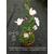 Camellia x transnokoensis Transcom 11612 F-THOBY