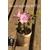 Azalea japonicum Rosa Belton Thoby
