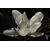 MAGNOLIA_grandiflora_Alta_thoby_gaujacq