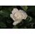 GARDENIA angustata Cronw Jewel- Thoby Gaujacq