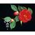 Camellia Grand Slam