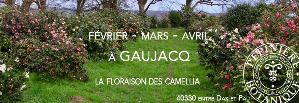 Camellia chemin de ronde Gaujacq v2