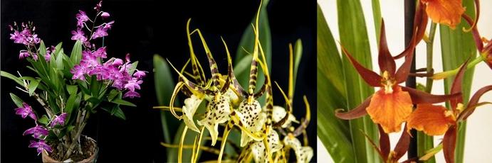 Orchidées Le Houelleur