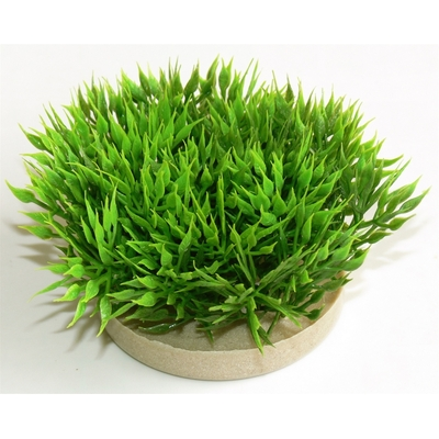 Green moss 7CM