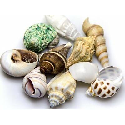 Reef Shells