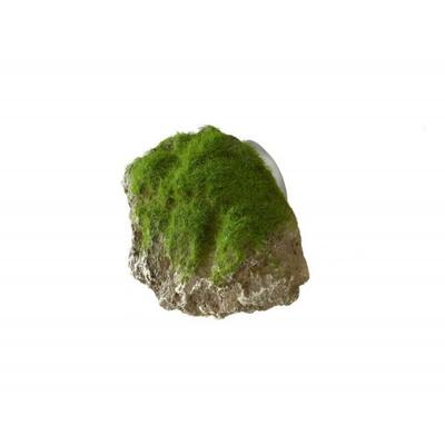 Moss stone-xs- ca.9x6x6,5cm with s XS - 9x6x6,5CM