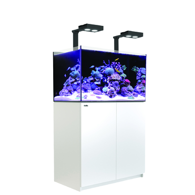 Reefer Deluxe 250 Blanc