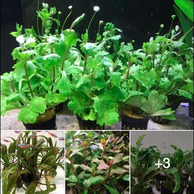 Pack Plantes Facebook (6 plantes)