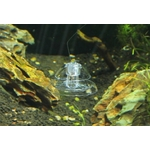Aquarium-fish-tank-and-plant-tank-slug