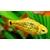 Puntius_semifasciolatus_1600_Valentin_Hintikka-56a32ff05f9b58b7d0d0dfd3
