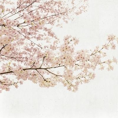 Panoramique Blossom