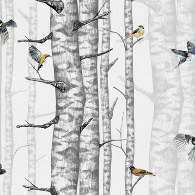 Papier peint Birch Trees