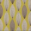 W359-02-laurus-acacia