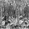 Arbre-du-voyageur-papier-peint-jungle-noir-blanc