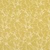 7758-01-acacia-quince_ombre-vegetales-arbre