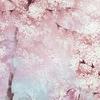 deco-japandi-papier-peint-misaki-mist-rose