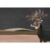 papier-panoramique-cerfs-Great-Deer-Nude-9500200