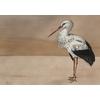 papier-peint-panoramique-oiseau-Stork-Mother-Nude-9500301