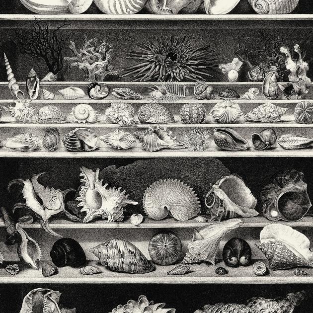 casamance-coquillages-et-crustaces