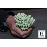 Ponpon Vert pastel et perle de tahiti  (8)