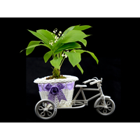 Lot de 10 pots vélo à fleurs PVC pour brins de muguets DMP13