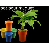 Lot de 50 pots à fleurs PVC pour brins de muguets DMP11