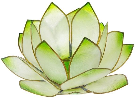 Lotus Lever du Soleil - Vert Lime