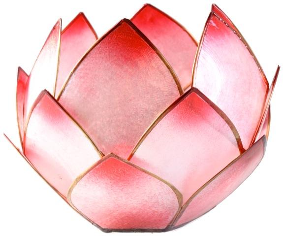 Lotus Crépuscule - Rosé